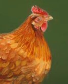 The proverb of 'The Chicken Has One Leg'